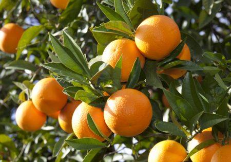 Kremali-orange-image2
