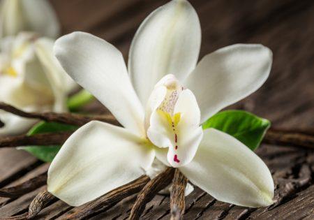 Kremali-vanille-image2